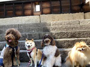 幼稚園生揃って丸亀城へ遠足。